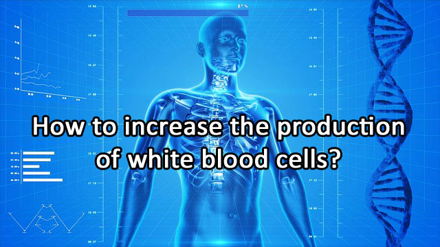 How to increase the production of white blood cells?